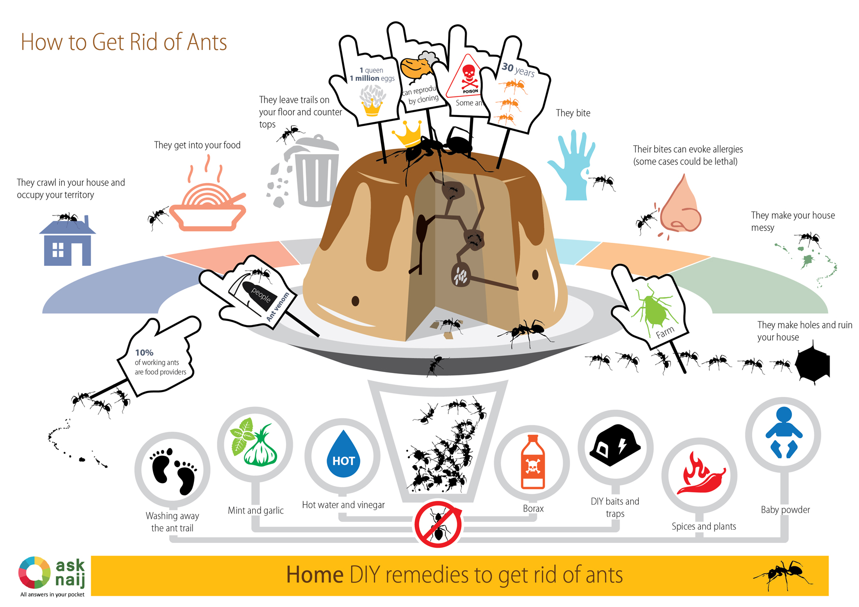 How to get rid of Ants-small
