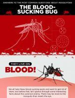 Answers to the Most Common Questions about Mosquitoes, the Blood Sucking Bug