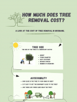 Tree Removal Costs in Brisbane