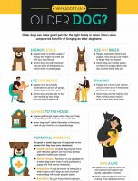 Why Adopt an Older Dog?