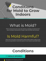 Conditions for Mold to Grow Indoors