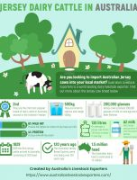 Jersey Dairy Cow Facts
