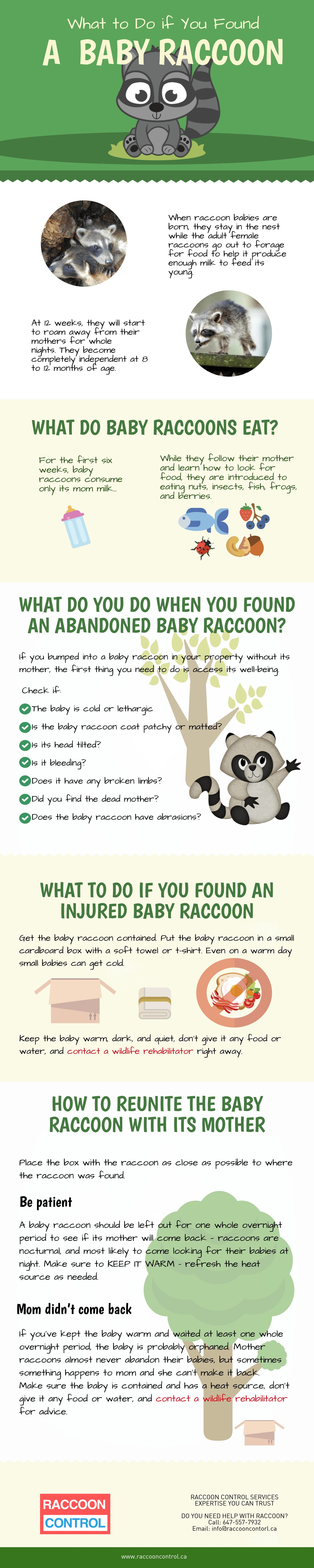 what-to-do-if-you-found-a-baby-raccoon-infographic-lkrllc